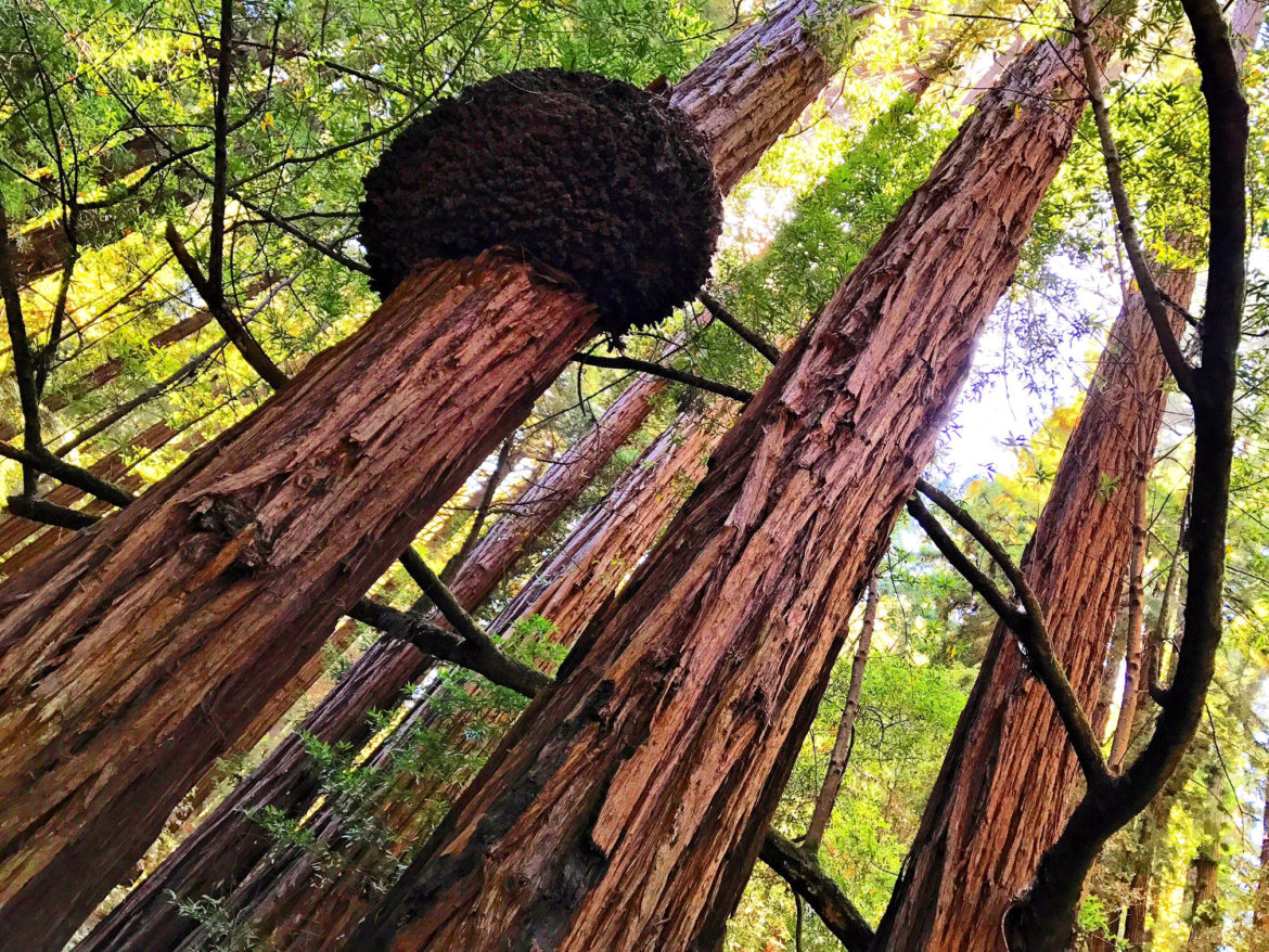Muir Woods National Monument Learn More About This Ancient Forest