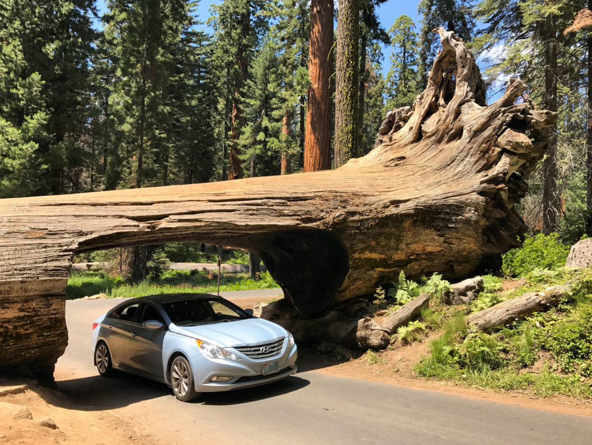 Sequoia National Park Is A Journey For The Heart And Soul